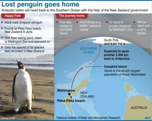 Graphic on the planned journey to return a lost emperor penguin back to the wild.