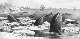 Gray whales likely survived the Ice Ages by changing their diets