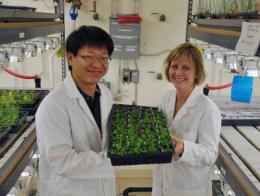 How plants sense low oxygen levels to survive flooding