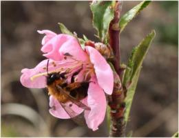 Pollinators make critical contribution to healthy diets