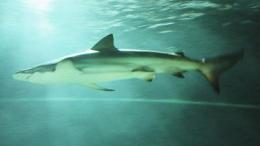 Scientists can track origin of shark fins using 'zip codes' in their DNA