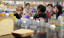 Students coax yeast cells to add vitamins to bread