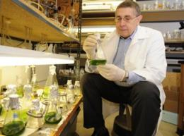 Scientists genetically increase algae biomass by more than 50 percent