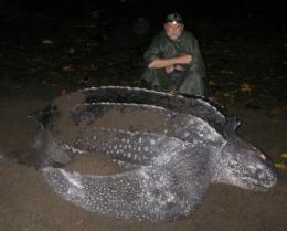 Researchers map long-range migrations and habitats of leatherback sea turtles in the Pacific Ocean