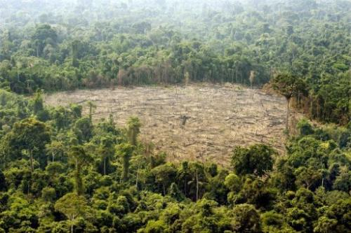 Aerial view of a deforested area at the Jamanxim National Forest, state of Para, northern Brazil