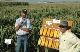 AgriLife Research project shows maximum irrigation and plant populations not necessary for corn