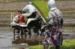 A man driving a rice transplanter machine while his wife (R)