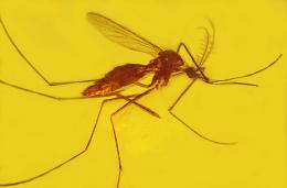 Analysis reveals malaria, other diseases as ancient, adaptive and persistent foes