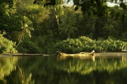 A river is pictured in the Costa Rican Pacific coast