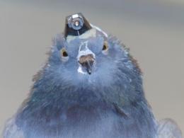 Auto-pilots need a birds-eye view