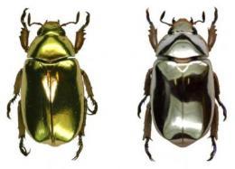 beetleblingr.jpg