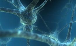 'Bilingual' neurons may reveal the secrets of brain disease