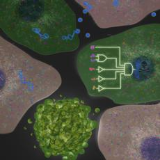 Biological computer destroys cancer cells