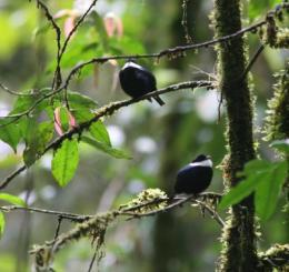 Birds must choose between mating, migrating, study finds