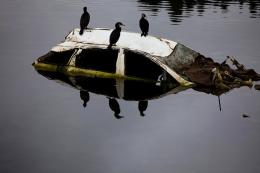 Birds sit on a wrecked car submerged in a river amid the tsunami devastation in Kesennuma, Miyagi prefecture in April