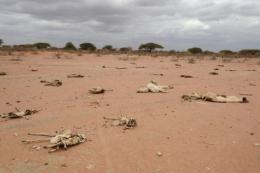 Carcasses of livestock are pictured north east of Nairobi, Kenya, during the region's prolonged drought