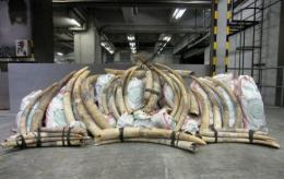 Chinese ivory consumption is exacerbating the killing of elephants in Africa, experts say