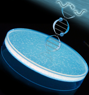 Click chemistry creates new 'stealth' DNA links