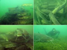 Colossal aggregations of giant alien freshwater fish as a potential biogeochemical hotspot