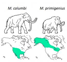 Researchers solve mammoth evolutionary puzzle: The woollies weren't picky, happy to interbreed