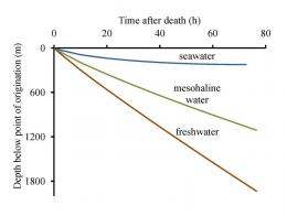 Death -- not just life -- important link in marine ecosystems