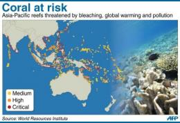 Coral at risk