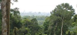 Deforestation reduces rainfall in Africa