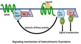 Discovery identifies elaborate G-protein network in plants