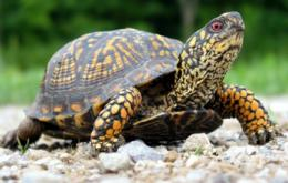 Discovery Places Turtles Next to Lizards on Family Tree