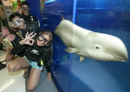 Divers with an Irrawaddy dolphin at a conference in Bangkok