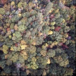 'Epidemiological' study demonstrates climate change effects on forests