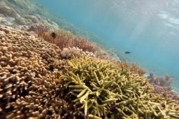 Experts said that dying coral reefs are accelerating