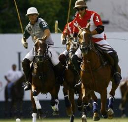 Exports of Polo Argentino horses grew four-fold between 2006 and 2010, a consultancy firm has said