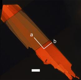 Faster organic semiconductors for flexible displays can be developed quickly with new method