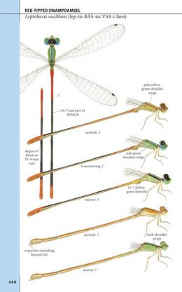Field guide for Texas damselflies highlights diversity of fascinating insects
