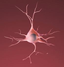 Finding shows potential way to protect neurons in Parkinson's, Alzheimer's, ALS