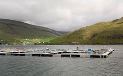 Fish farms less harmful than thought