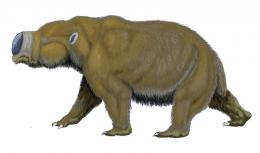 Giant prehistoric marsupial found in Northern Australia