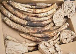 Global ivory trade has been banned since 1989 but there has been a dramatic surge in illegal trafficking since 2005