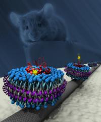 Grafting olfactory receptors onto nanotubes