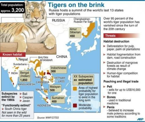 Graphic on the world's wild tiger populations.