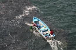 Holy mackerel! Plenty of fish in Acapulco seas (AP)