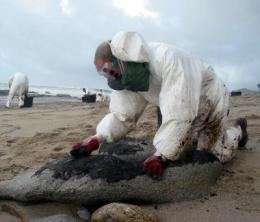 Hydrocarbon pollution along the coast of Galicia shot up five years after the Prestige oil spill