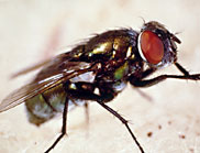 Identifying the origin of the fly