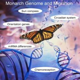 Introducing the monarch butterfly genome