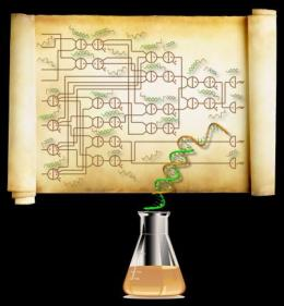 Largest biochemical circuit built out of small synthetic DNA molecules