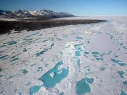 Arctic beaches littered with polar bear toothpicks