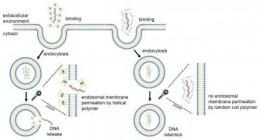 Let's do the twist: Spiral proteins are efficient gene delivery agents