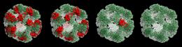 Massive enzyme footballs control sugar metabolism