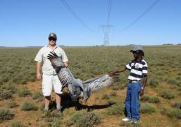 Men hold an electrocuted blue crane